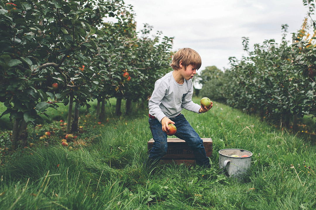 portrait of boy in Hampshire apple orchard by Moira Lizzie Photography