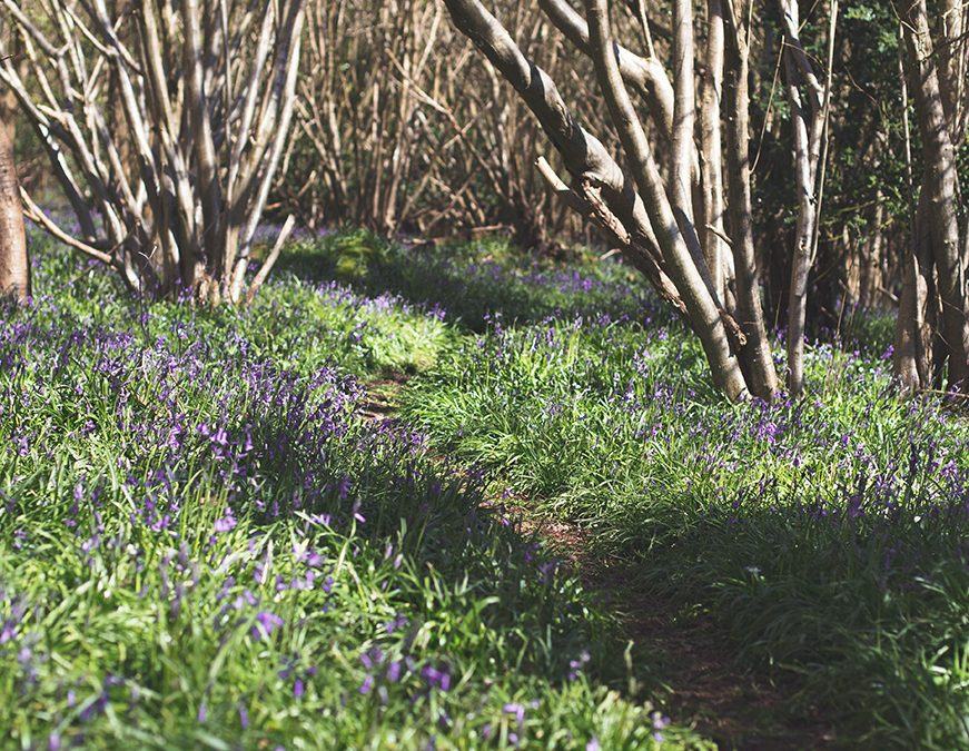 Everything's coming up bluebells
