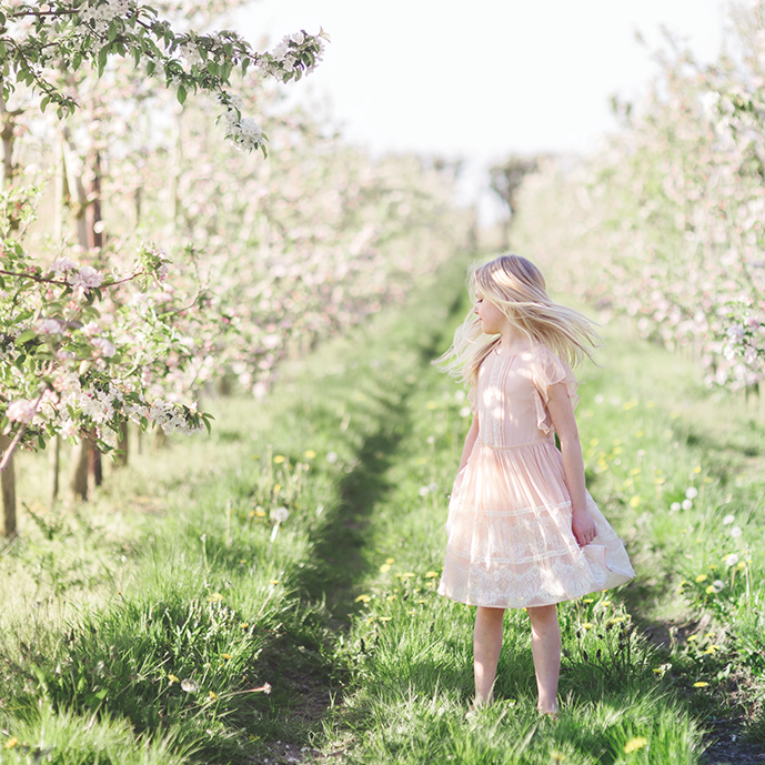Apple blossom in Spring by Moira Lizzie Photography